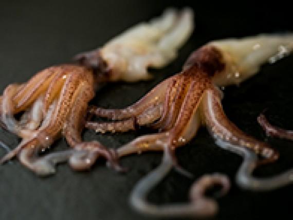 seiches-et-poulpes
