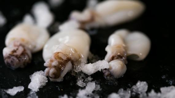 anneau-encornet-blanchi